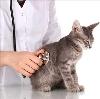 Ветеринарные клиники в Мошенском